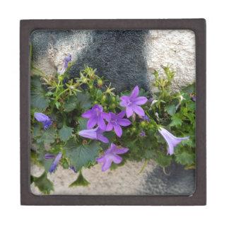aus der Wand-Blume heraus Schmuckkiste
