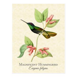 Ausgezeichneter Kolibri-Vintage Kunst Postkarte