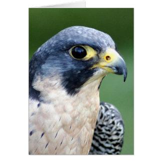Ausländischer Falke-Gesichts-Foto Karte