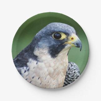 Ausländischer Falke-Gesichts-Foto Pappteller 17,8 Cm