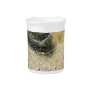 Austern Getränke Pitcher