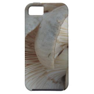 Austern-Pilze Hülle Fürs iPhone 5