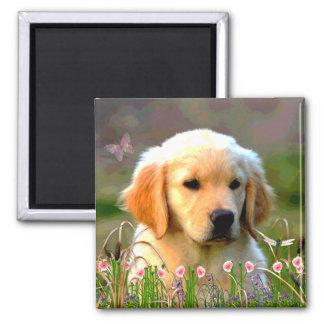 Hunde Magnete