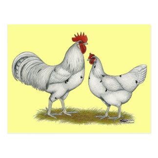 Austra Weiß-Hühner Postkarten