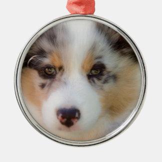 Australian shepherd puppy silbernes ornament
