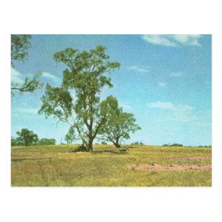 Australien, Eukalyptusbäume, Hattab Sebereich Postkarte