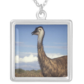 Australien, Western Australien. Emu (Dromaius Versilberte Kette