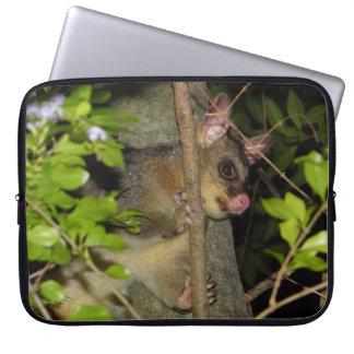 Australier Brushtail Opossum Laptopschutzhülle