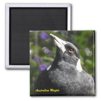 Australische Elster Quadratischer Magnet