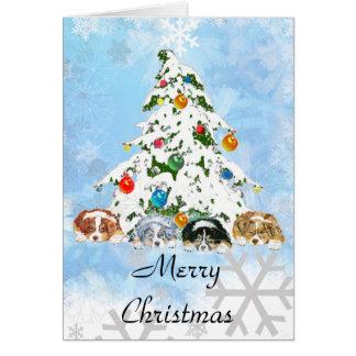 Australische Schäfer ~ Weihnachtskarte Karte