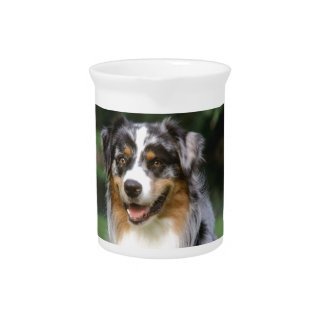 Australischer Schäfer-Hund Getränke Pitcher