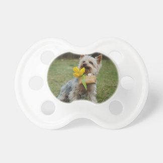 Australischer seidiges Terrier-Hund Schnuller