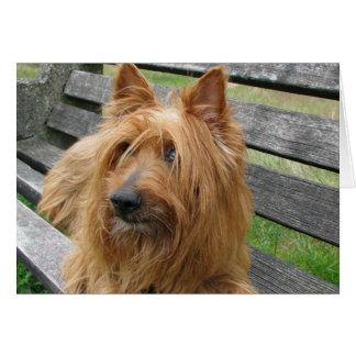 australischer Terrier auf bench.png Karte