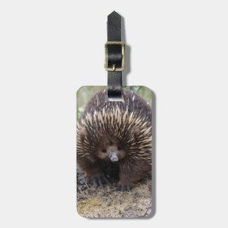 Australisches Echidna-Tier-Foto Gepäckanhänger