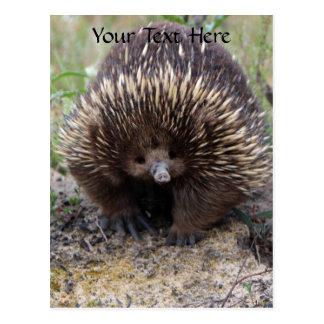 Australisches Echidna-Tier-Foto Postkarte