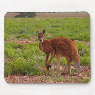 Australisches rotes Känguru mousepad