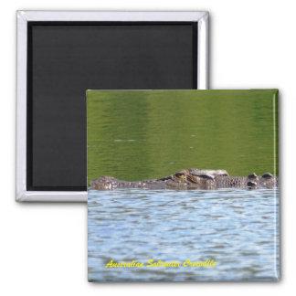 Australisches Salzwasser-Krokodil Quadratischer Magnet