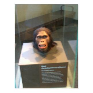 Australopithecus africanus; Museumsausstellung Postkarte