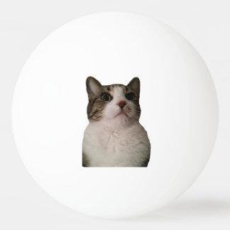 Authentischer Katzen-Ball Tischtennis Ball