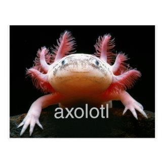 AxolotlAxolotlAxolotlAxolotl Postkarte