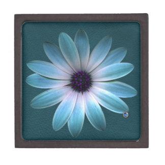 Azurblaues Gänseblümchen auf Dunkelheit bis Schmuckkiste