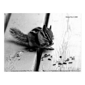 B&W Chipmunk-Eichhörnchen-Postkarte Postkarte