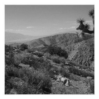 B&W Joshua Baum-Nationalpark 2 Poster
