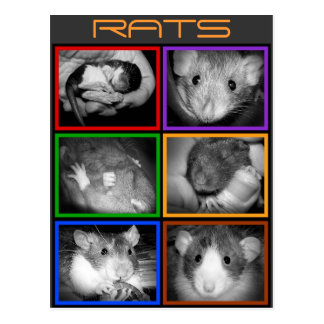 B&W RATTEN-Collage Postkarte