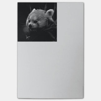 B&W roter Panda Post-it Klebezettel
