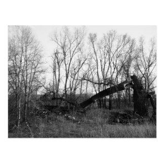 B&W - Toter u. defekter Baum auf einem Gebiet Postkarte