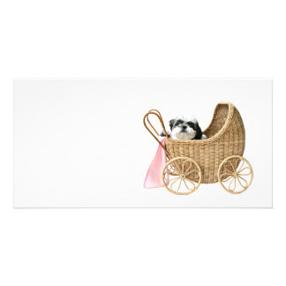 Baby-Buggy Shih Tzu Bild Karte