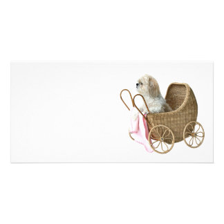Baby-Buggy Shih Tzu Photo Karten Vorlage