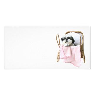 Baby-Buggy Shih Tzu Photokartenvorlagen