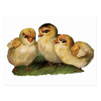 baby-chicks-3.jpg postkarte