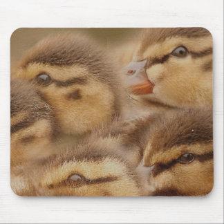 Baby duckt Entlein-Vogel-Tier-Tier-Stockente Mauspads