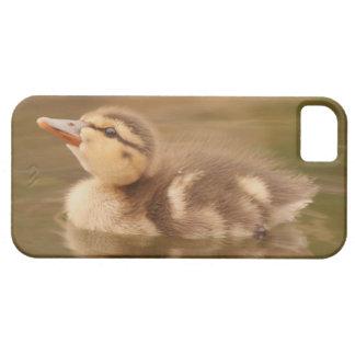 Baby duckt Entlein-Vogel-Tier-Tier-Stockente Schutzhülle Fürs iPhone 5