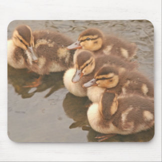 Baby duckt Vogel-wild lebende Tiere Mousepad
