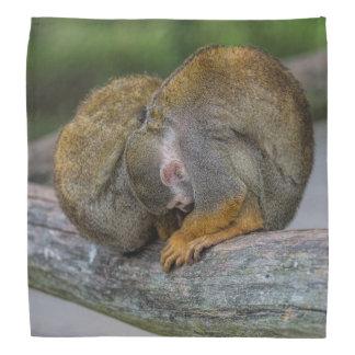 Baby-Eichhörnchen-Affe Halstuch