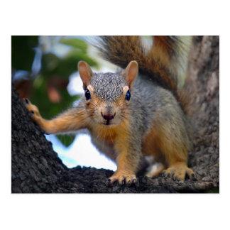 Baby-Eichhörnchen im Baum Postkarten