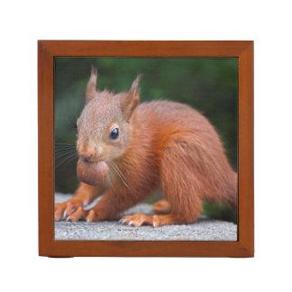 Baby-Eichhörnchen mit Stifthalter
