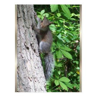 Baby-Eichhörnchen- Postkarte