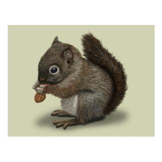 Baby-Eichhörnchen Postkarte