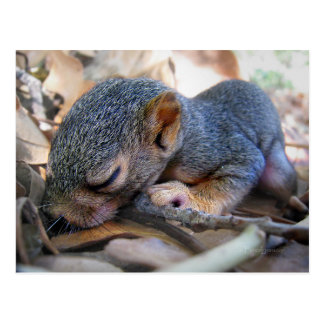 Baby-Eichhörnchen-Schlafen