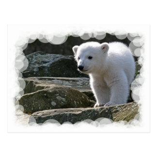 Baby-Eisbär-Postkarte Postkarte