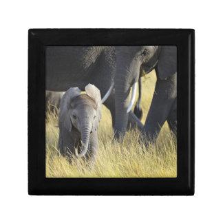 Baby-Elefant Erinnerungskiste