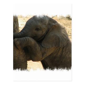 Baby-Elefant-Karte Postkarte