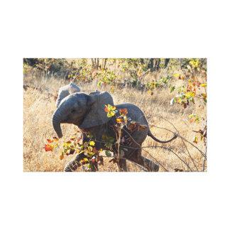 Baby-Elefant Leinwanddruck