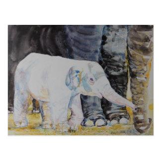 Baby-Elefant mit Mutter Postkarte