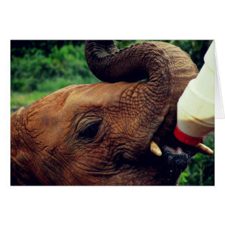 Baby-Elefant-Nahaufnahme-Füttern Karte