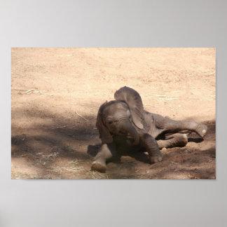 Baby-Elefant Poster